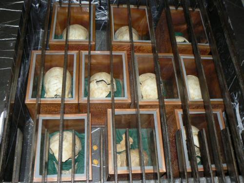 Скравена - черепи